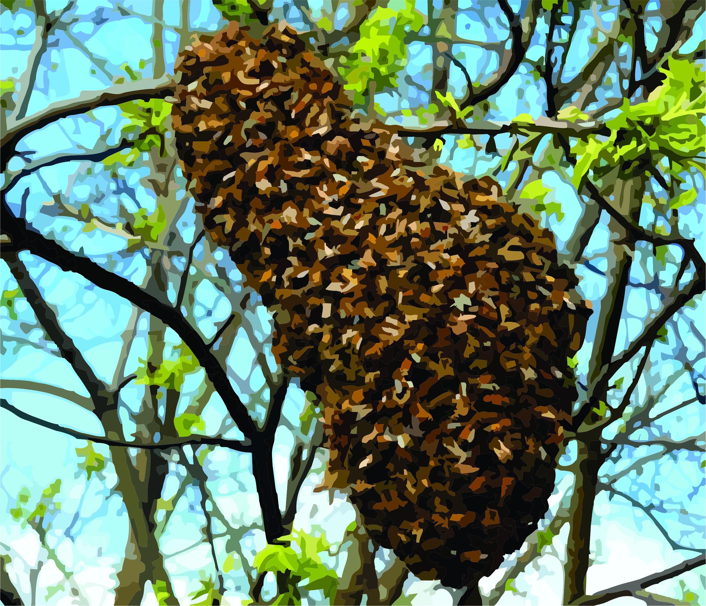 Bee Swarm Removal, Boerne & Fredericksburg – Bee Peaceful Beekeeping